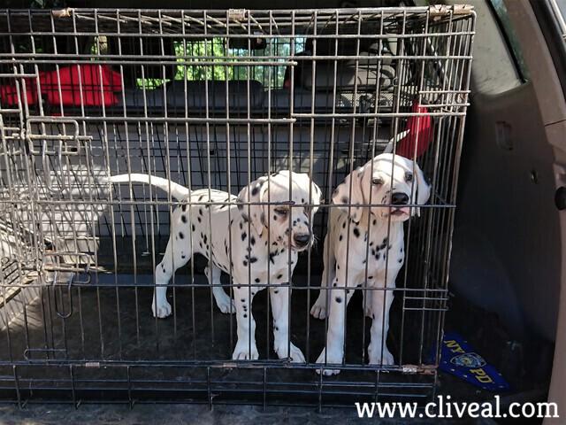 cachorros en la jaula